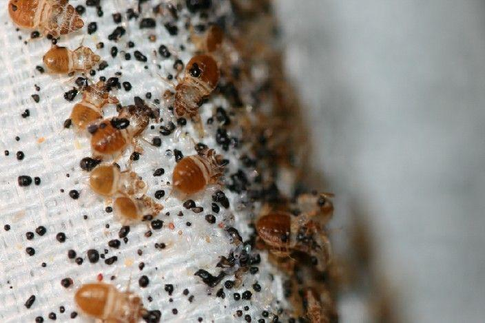 How to Prevent a Bedbug Invasion with the Proper Bedding